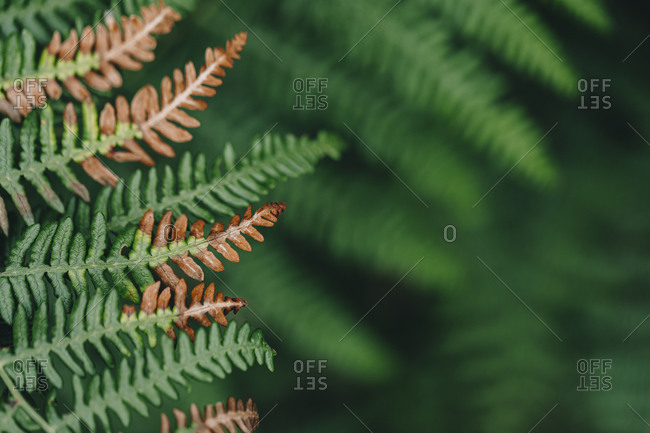 Close up of brown and green wild fern