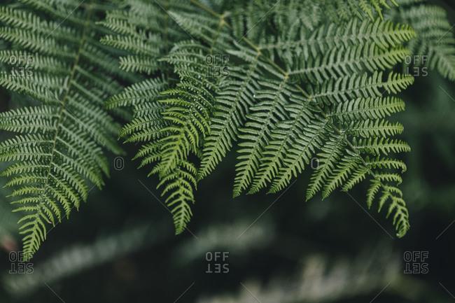 Green wild fern close up