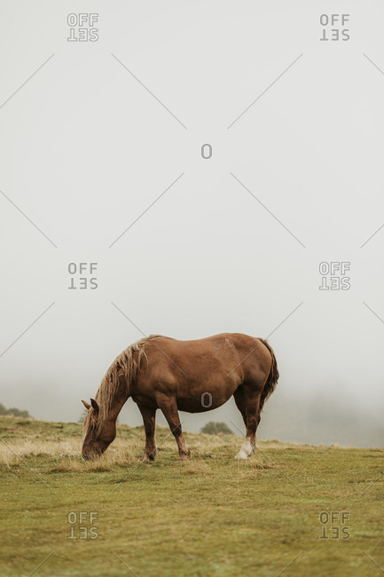 A wild horse in the Pyrenees mountains in France