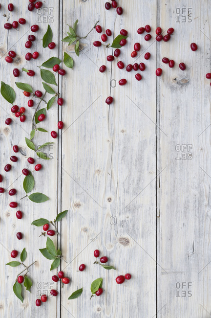 Green twig and Cornelian cherries (Cornus mas) on white wooden surface
