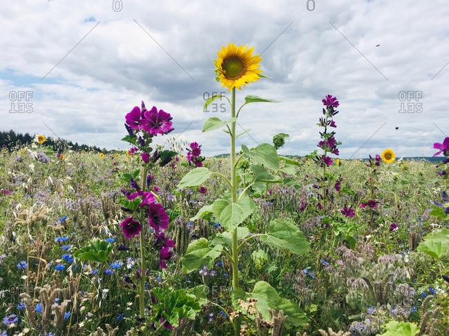 Wildflowers blooming in springtime meadow
