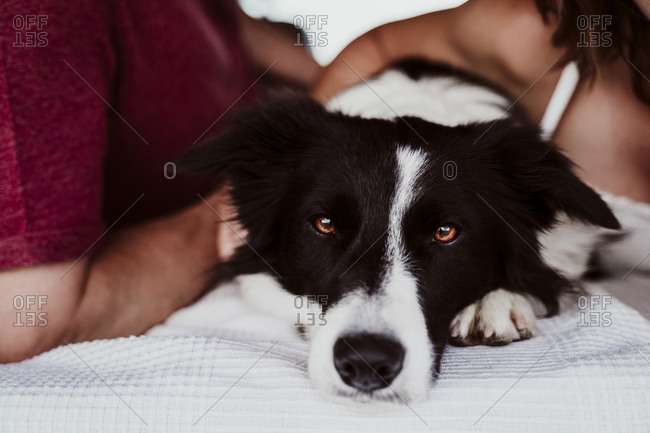 Close-up of dog with owners in motor home