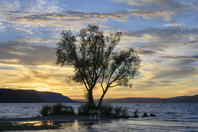 Silhouette of tree growing on shore of Lake Constance at sunset