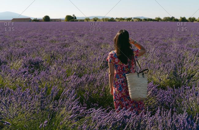 Woman standing in vast lavender field