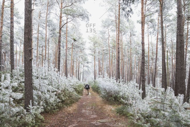 Germany- Rhineland-Palatinate- Lone hiker walking in frosted Palatinate Forest