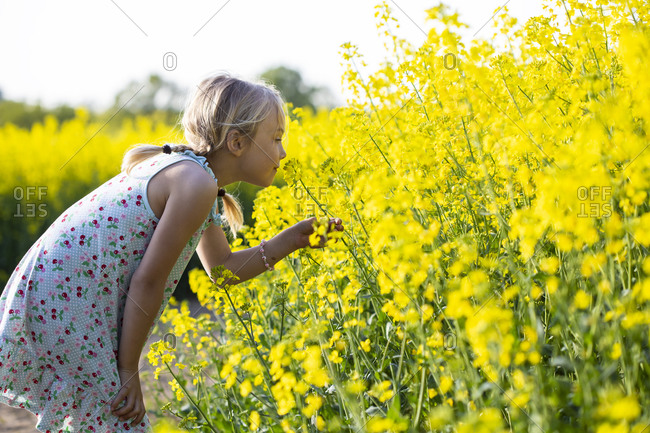 Little girl taking smell of rapeseed flowers while standing in field