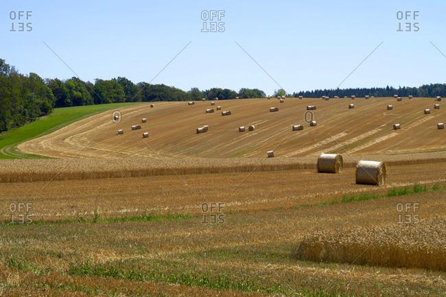Hay bales drying in field