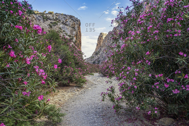 Road by flowering plant leading to mountain against blue sky