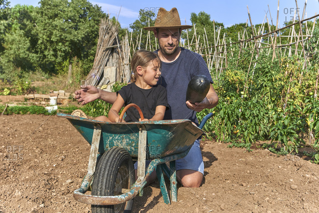 Father showing a zucchini to his daughter sitting in wheelbarrow
