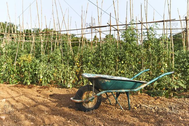 Wheelbarrow in garden on a sunny day