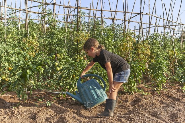Girl watering tomato plants with watering can