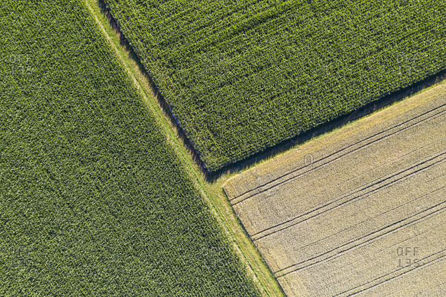 Germany- Baden-Wurttemberg- Aerial view of corn and wheat fields in summer