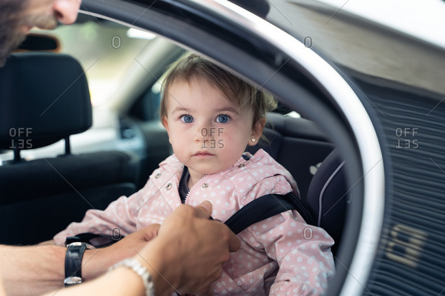 Cute toddler girl sitting in car and looking at camera while unrecognizable father fastening security belt before trip