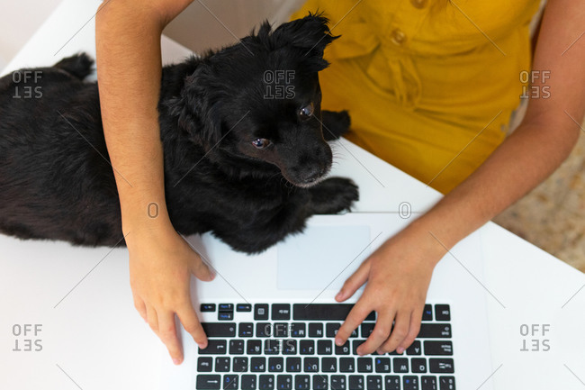 Top view of unrecognizable female entrepreneur sitting at table with cute puppy and typing on laptop while working remotely at home