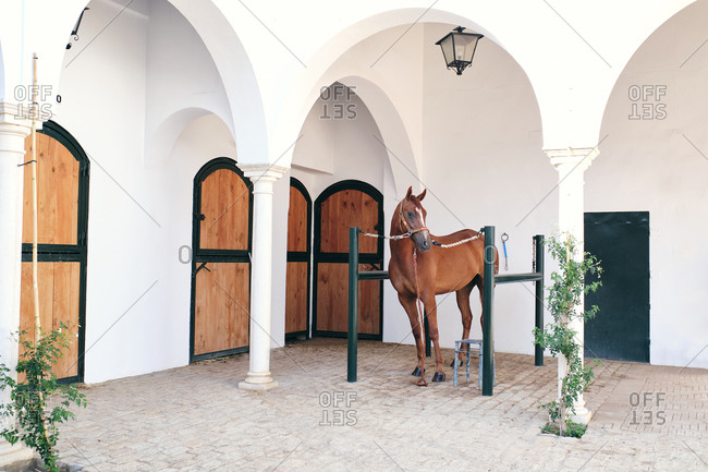 Graceful chestnut stallion tied to wooden barrier standing in courtyard in countryside and looking away