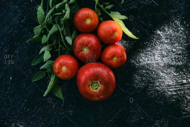 From above of fresh ripe red tomatoes arranged with green branches on back slate board