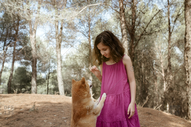 Happy little child in colorful summer dress playing with obedient Shiba Inu dog while standing together in forest