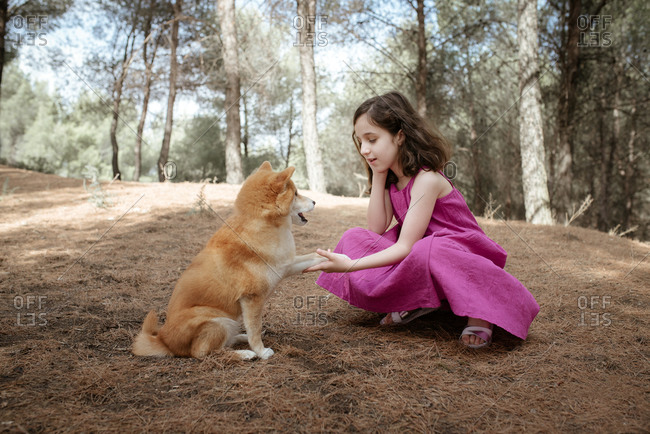 Full length of happy little child in colorful summer dress playing with obedient Shiba Inu dog while sitting together in forest