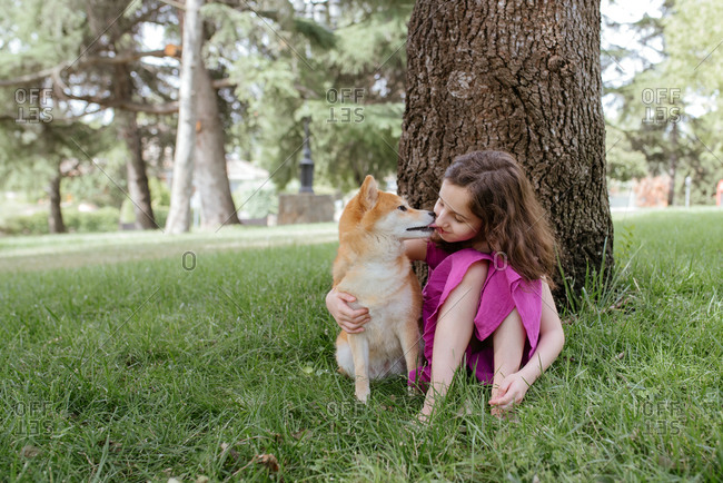 Little girl in summer dress embracing and kissing cute Shiba Inu dog while sitting together on green lawn near tree in summer park