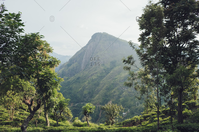 Picturesque scenery of mountain peak surrounded by green lush tropical forest in sunny day in Sri Lanka