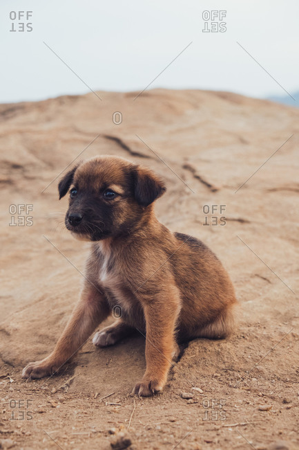 Adorable fluffy puppy relaxing on sand on hill during cloudy day and looking away