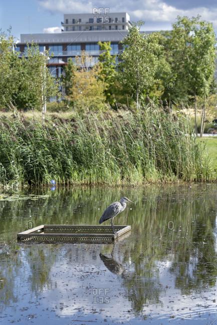 France,  Saint-Ouen,  Docks area,  Heron