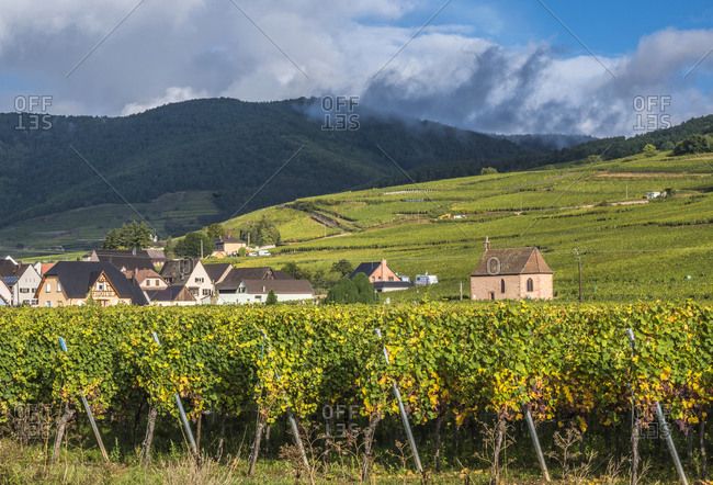 France,  Alsace,  Wine Route,  vineyard and village of Sigolsheim