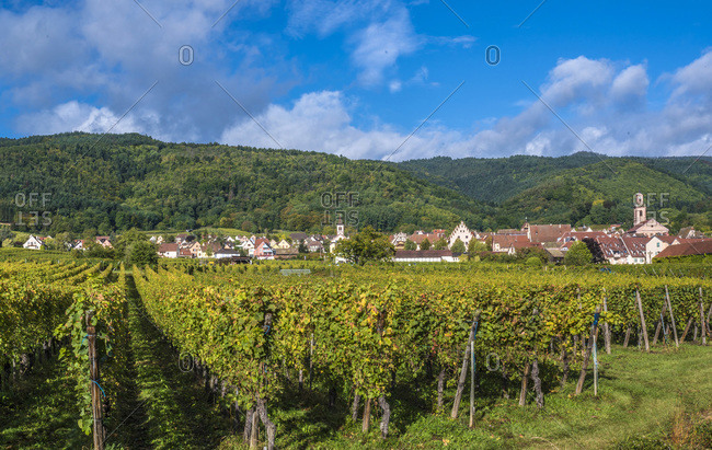 France,  Alsace,  Wine Route,  vineyard and village of Riquewihr (Most beautiful village in France)