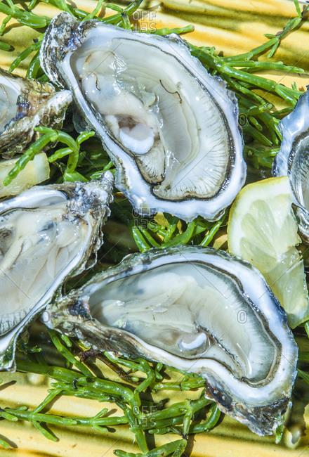France,  Arcachon bay,  oyster