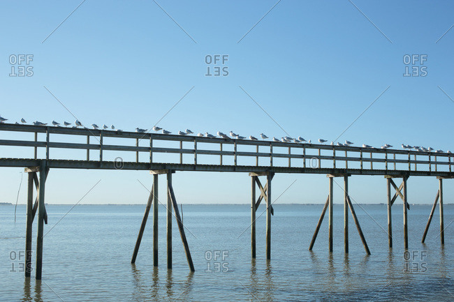 France,  Les Moutiers-en-Retz,  44,  seagulls gathered on the pontoon of a fishery.