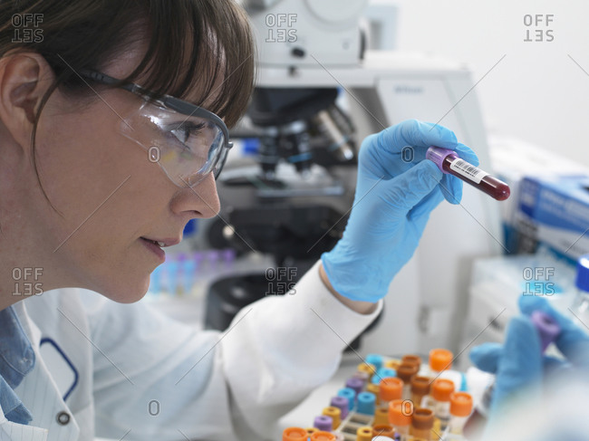 Female scientist examining blood sample ready for testing  in laboratory