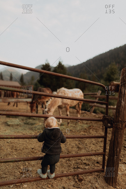 Female toddler looking at horses in paddock, rear view, Mineral King, California, USA