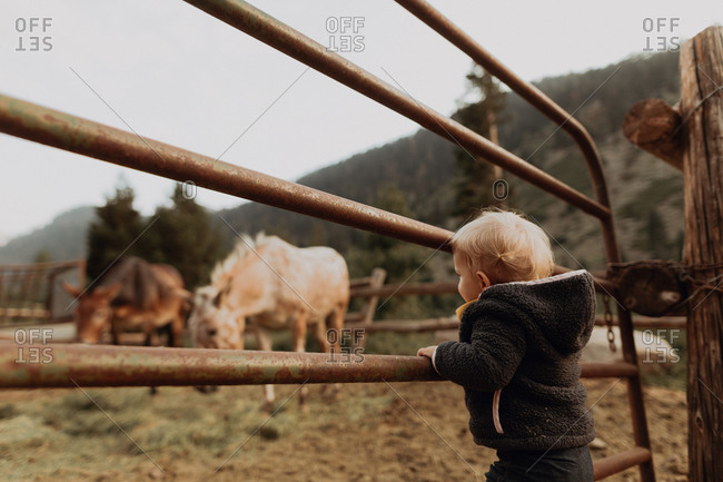 Female toddler looking at horses in paddock, Mineral King, California, USA