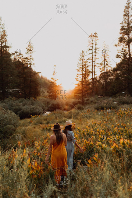 Two women in maxi dresses walking through wildflowers at sunset in rural valley, rear view, Mineral King, California, USA