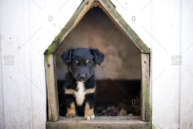 Puppy inside dog kennel, Canada