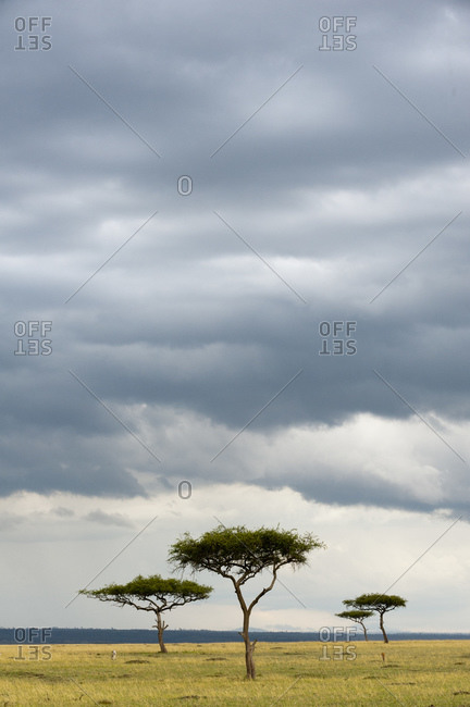 Cloudscape over trees in safari, Masai Mara National Reserve, Kenya