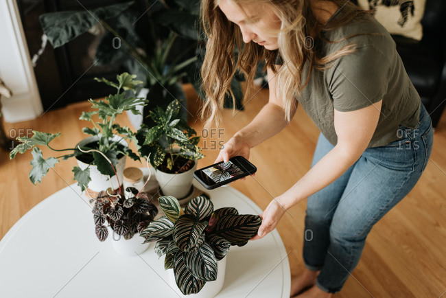 Woman taking photo of house plants with mobile phone