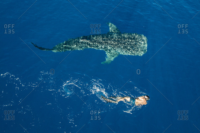 Man swimming beside humpback whale