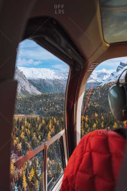 Helicopter above Canadian Rockies with larches turning yellow during fall, Alberta, Canada