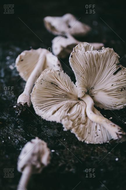 White mushrooms in the soil