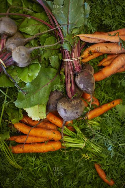 Beetroots and carrots on grass
