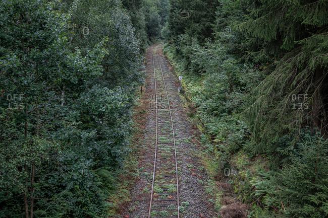 Train tracks leading through a forest