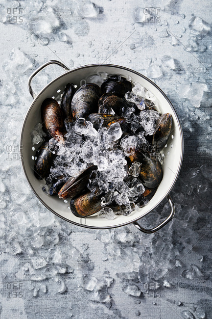 Mussels in a colander with ice