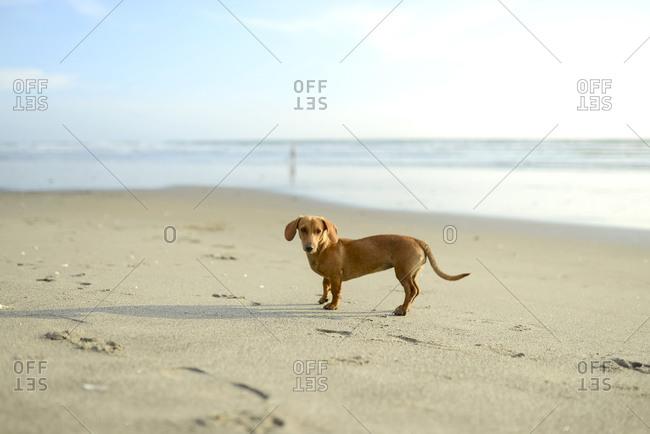 Dog on a beach having fun