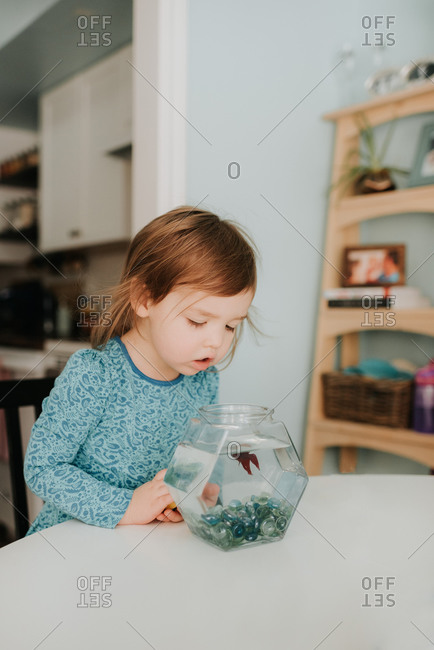 Female toddler peering at goldfish bowl on table