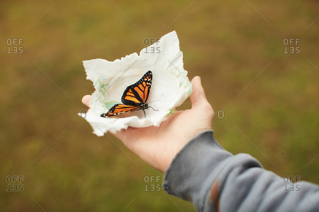 Monarch butterfly on tissue in palm