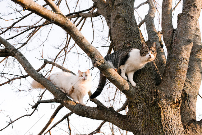 Two cats looking out from bare tree branches