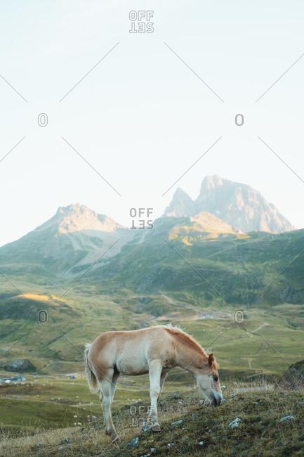 Little cute horse grazing on a warm morning in Portalet
