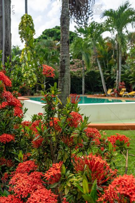 September 1, 2019: America, Caribbean, Greater Antilles, Dominican Republic, Samana, Las Terrenas, Hotel La Tortuga in Las Terrenas