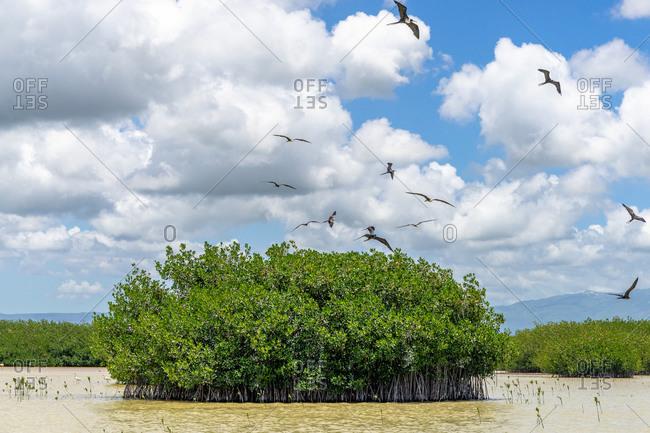 America, Caribbean, Greater Antilles, Dominican Republic, Oviedo, Laguna de Oviedo, waterfowl circle around small island in the saltwater lake Laguna de Oviedo